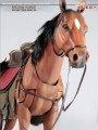 Asmus Toys 1/6 CRE002 The Brown Horse