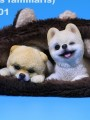 Mr.Z - Real Animal Series No.20 - 1/6 Scale Pomeranian Puppies Statue ( 2 Colors )