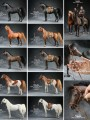 Mr.Z - 051 - 1/6 Scale Animal Model - Arabian Horse + Harness Set (5 Color Type)