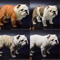 Toys City - M9009A/B/C/D - 1/4 Scale Short Body British Bulldog ( 4 Colors )