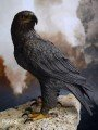 End I Toys - 1/6th Scale Collectible Figure - The Condor Heroes - The Eagle
